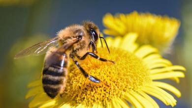 Photo of Arı Sokması Tedavi Yöntemleri Hakkında Bilgiler